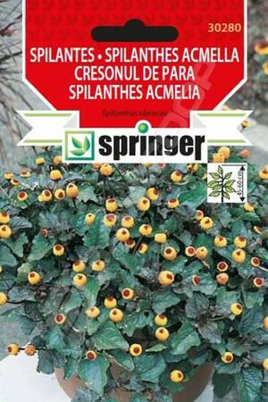 SPRINGER Lekovito bilje Spilantes 0,1g 30280